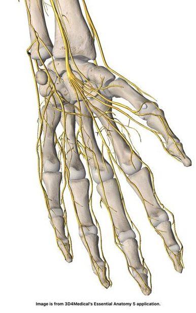 fingrar domnar vänster hand